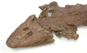 فسیل ماهی چهار پا برای نمایش در موزه به کانادا بازگردانده شد