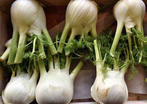 خواص گیاهی رازیانه