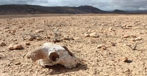 کشفیات تازه، دانش ما درباره مرگبارترین انقراض جمعی تاریخ را به چالش میکشند
