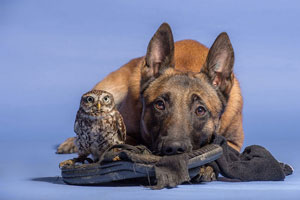 دوستی شگفتانگیز سگ و جغد