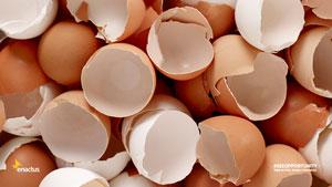 پوست تخممرغ را دور نریزید!
