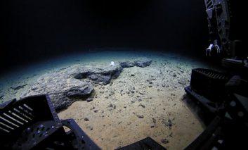 کشف هشتپایی دوست داشتنی و عجیب توسط روبات جستجوگر آبهای عمیق