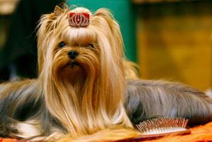 بزرگترین نمایشگاه سگ جهان