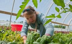 محققان میگویند کشاورزی ارگانیک از کشاورزی سنتی سودآورتر است
