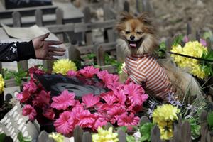 گورستان مختص حیوانات خانگی