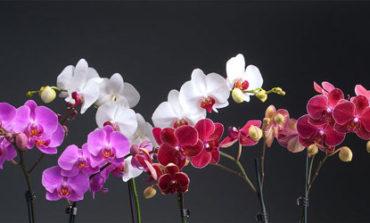 ۱۰ گیاهی که انرژی مثبت جذب میکنند