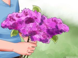 چگونه گل یاس پرورش دهیم؟