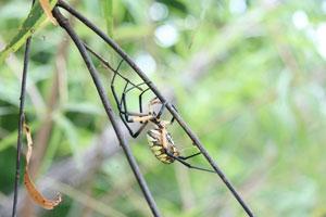 ۱۰ روش غیرسمی برای دفع عنکبوتها