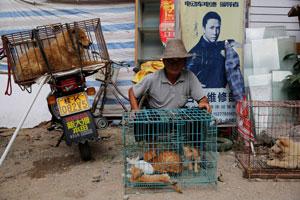 مراسم بیرحمانه گوشت سگخواری در چین
