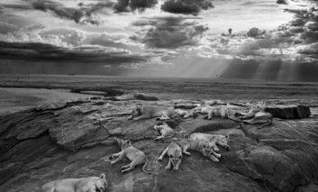 برنده جایزه «عکاس حیات وحش سال» معرفی شد