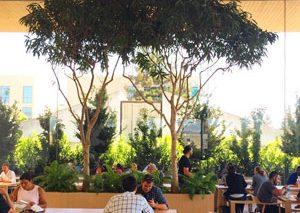 کافه جدید و جذاب شرکت اپل