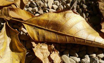 پاییز، فصل رنگهای طلایی؛ یک روز تصویربرداری با Note 4 سامسونگ