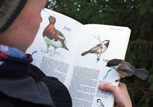 اپلیکیشن تشخیص نوع پرندگان از طریق صدای آنها + ویدیو