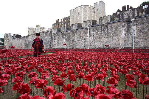شقایقهای برج لندن ادای احترام به تلفات انسانی جنگ جهانی اول هستند