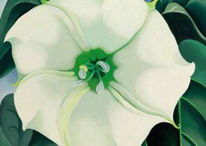 نقاشی گل «جرجیا اوکیف» با فروش ۴۴/۴ میلیون دلار رکوردها را میشکند