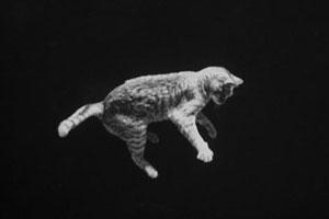 گربههای فضایی
