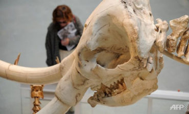 محققان به نتیجه رسیدند: ماستودونها ۱۲۵هزار سال پیش زندگی میکردند