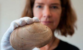 کشف حکاکی به قدمت ۵۰۰هزار سال