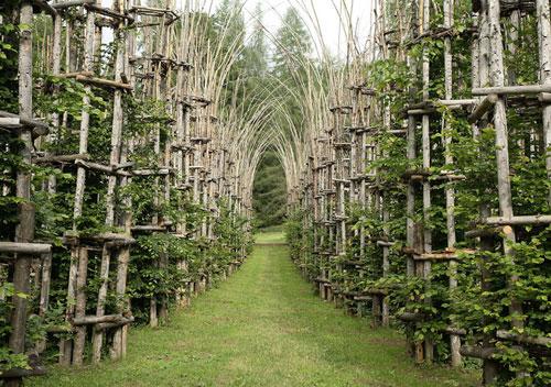 «کلیسای درختی»؛ زیباترین نمونه معماری طبیعی