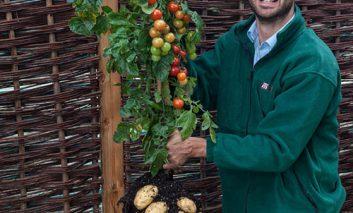 درختچهای که هم گوجهفرنگی میدهد هم سیبزمینی! + ویدیو