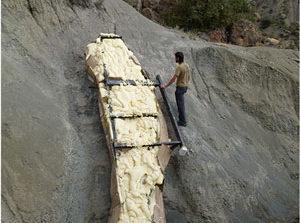 کشف گردن پنج متری از یک دایناسور