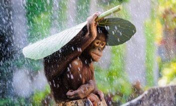 مسابقه جهانی عکاسی سونی ۲۰۱۵