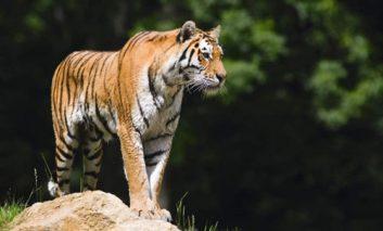 افزودن تأثیر بیشتر به عکسهای حیوانات با استفاده از ابزار Sharpening فتوشاپ