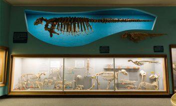 «پوست و استخوان»: اپلیکیشن جدیدی موزه تاریخ طبیعی آمریکا