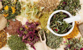 با چند گیاه دارویی شفابخش آشنا شوید