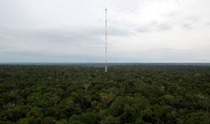 برجی در میان جنگل آمازون