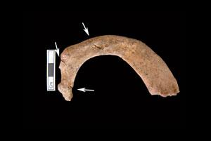 کشف بقایای ۵ تن در مقبره متعلق به دوران اسکندر کبیر