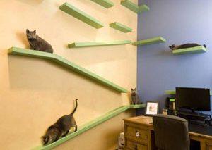 خانه رویایی گربهای! + ویدیو