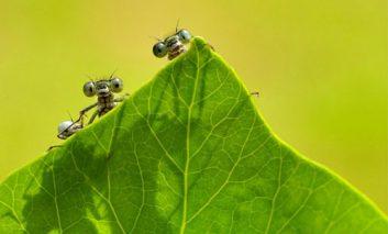 برندگان مسابقه «عکاس باغ» سال ۲۰۱۵
