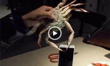 تست استحکام گوشی هوشمند با خرچنگ و شاهمیگو! + ویدیو