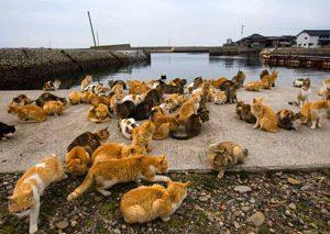 جزیره گربهها!