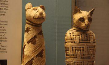 مصریان باستان و تقلب در فروش مومیایی حیوانات