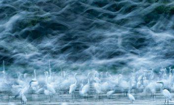 ۱۰ عکس برگزیده مسابقه عکاسی نشنال جئوگرافی ۲۰۱۳