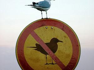 ورود دزدها ممنوع؛ از بدترین علامتهای شهری