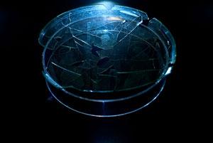 کشف تیپ اسپورت مسیح بر روی یک بشقاب قرن چهارمی