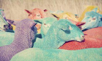 گوسفندهای آبنبات رنگی