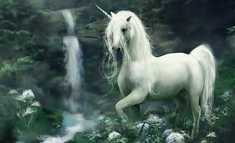 آیا اسب تک شاخ وجود دارد؟
