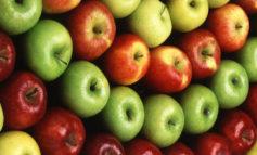 نُه خوراکی مفید فصل پاییز از نظر طب چینی
