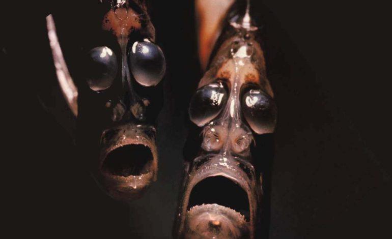 خوفناکترین اما بیآزارترین موجودات روی کره خاکی