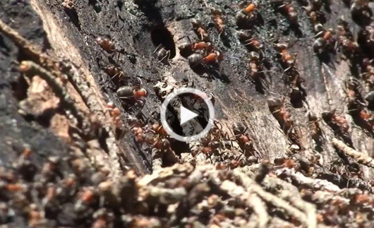 چند فوت و فن برای مقابله با مورچهها