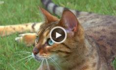 سلاح مخفی گربهها