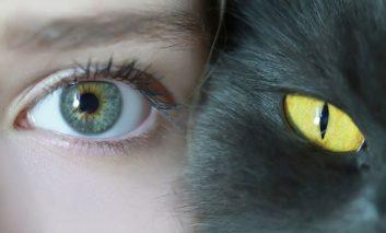 دنیا از نگاه گربهها