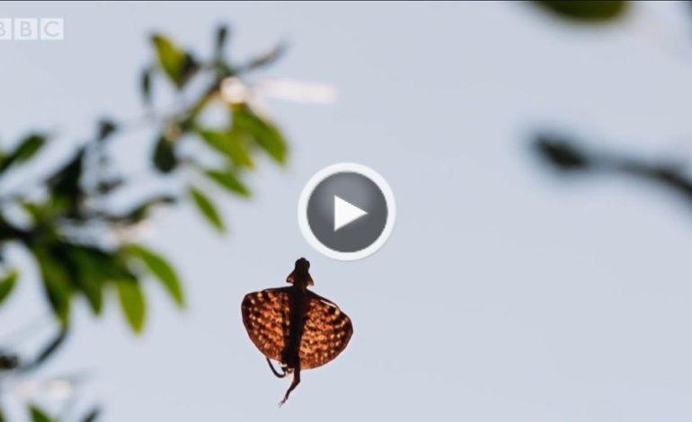 پرواز اژدهای جنگل (بخشی از Planet Earth II)