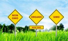 شباهت مواد غذایی تراریخته، معمولی و ارگانیک: چیزی فراتر از انتظار