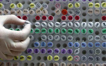 هشدار درباره «نقش» محصولات تراریخته در افزایش آلزایمر و دیابت