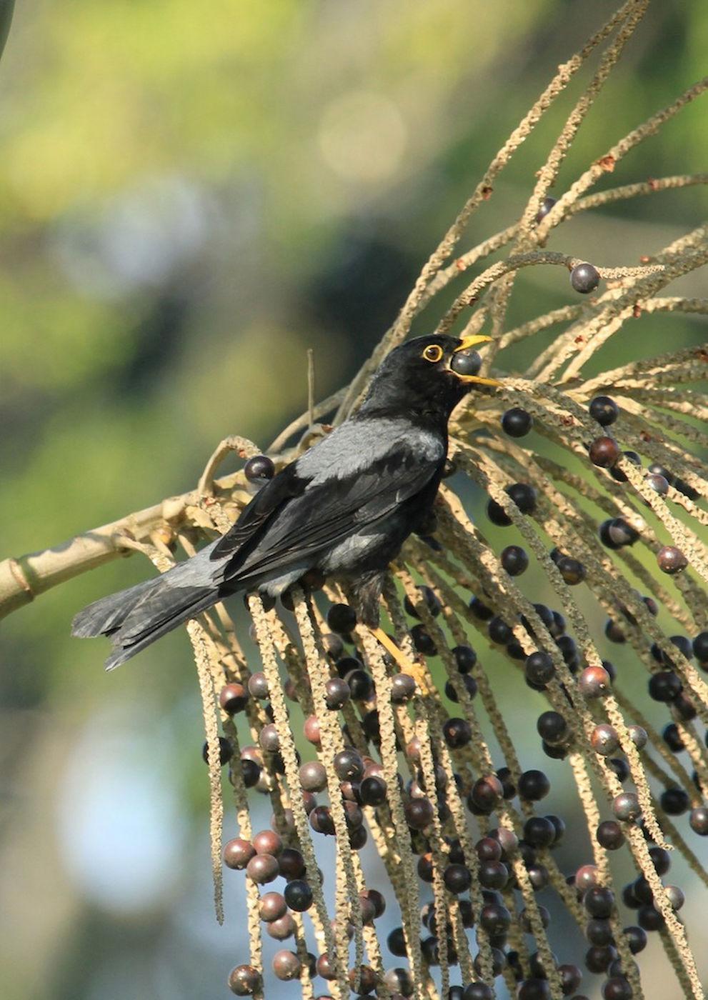 brazil-bird-130530